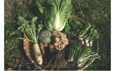 能登旬の野菜